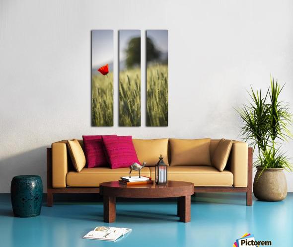 poppy Split Canvas print