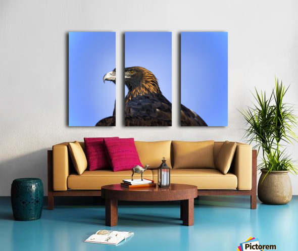 Golden Eagle Split Canvas print