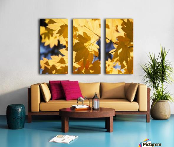 Vine Maples Leaves In Autumn Split Canvas print
