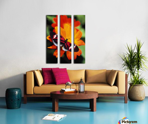 Butterfly On Flower Split Canvas print