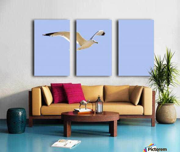 Seagull In Flight Split Canvas print