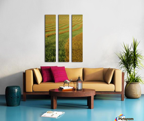 Rows Of Canola Windrows Split Canvas print