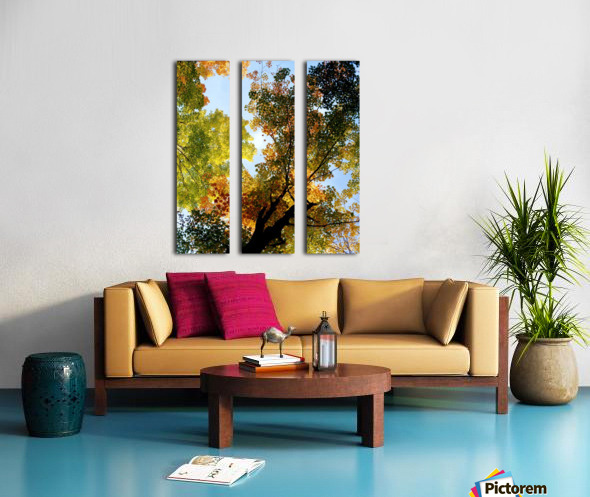 Autumn Trees Low-Angle Split Canvas print