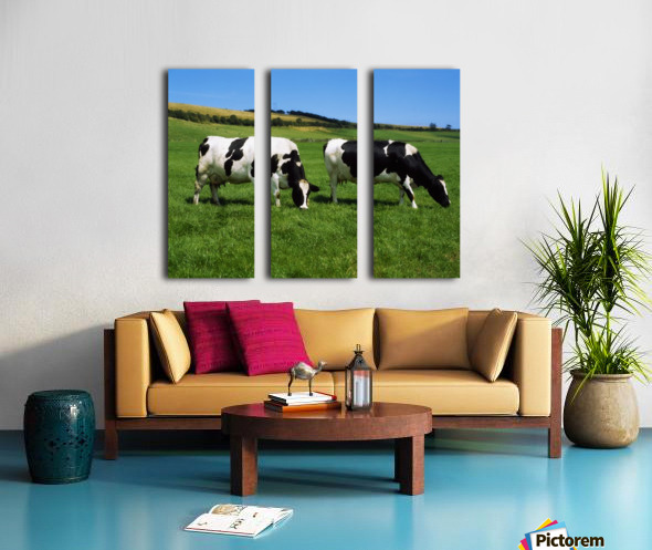 County Cork, Ireland, Dairy Cattle Split Canvas print