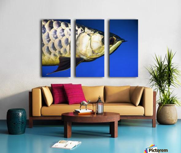 Closeup Of A Fish Split Canvas print