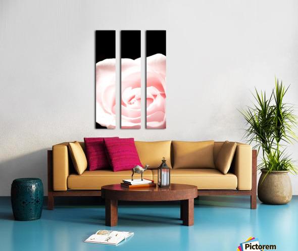 Pink Rose, Close-Up Split Canvas print