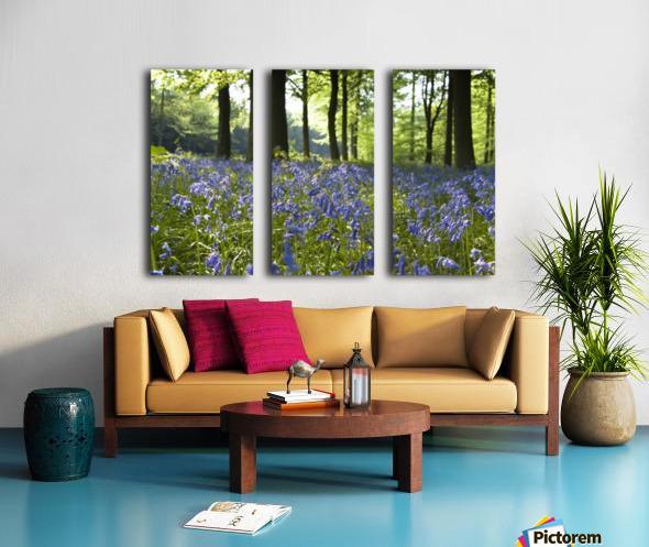 Bluebells On Forest Floor Split Canvas print