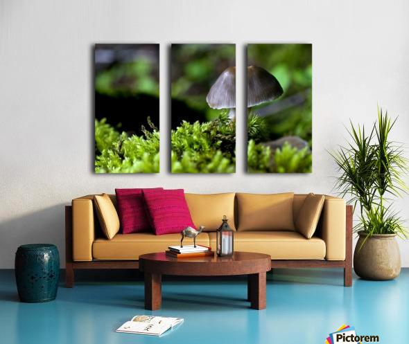 Closeup Of Mushroom Split Canvas print