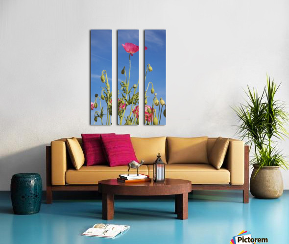 Red Flower Against Blue Sky Split Canvas print
