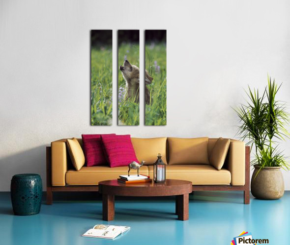 Wolf Puppy Howling In Mountain Meadow Split Canvas print