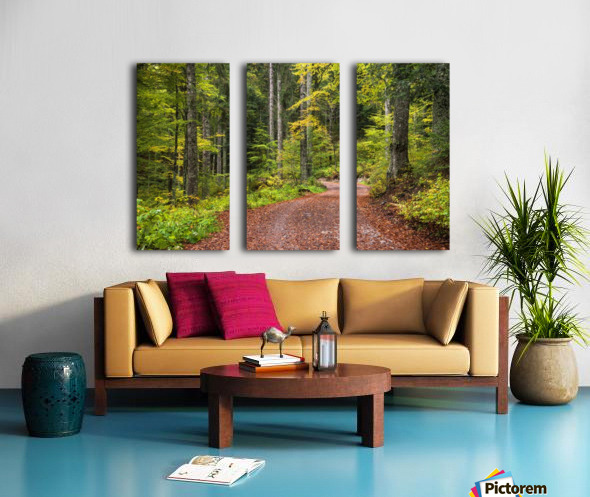 Fall Forest Split Canvas print