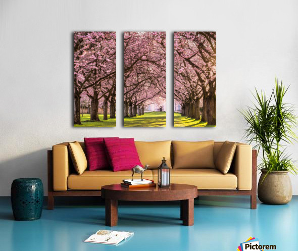 Cherry Blossom in a Park Split Canvas print