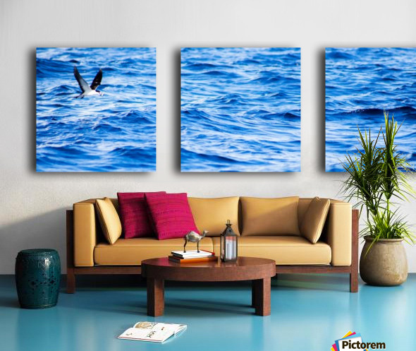 Tern Split Canvas print