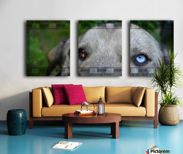 Blue Eyed Dog Split Canvas print
