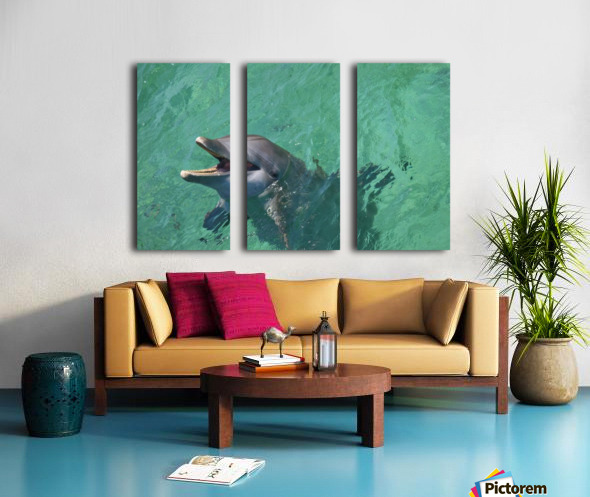 Roatan, Bay Islands, Honduras; Bottlenose Dolphin (Tursiops Truncatus) At Anthony's Key Resort Split Canvas print
