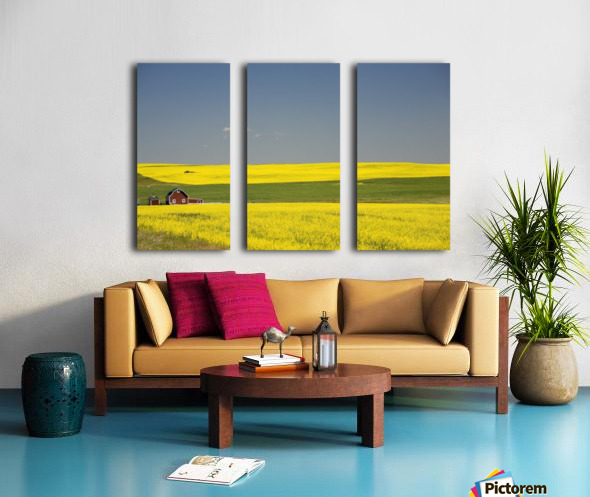 Flowering Canola Fields And A Red Barn; Alberta, Canada Split Canvas print