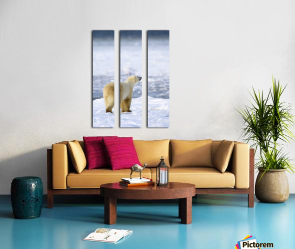 Polar Bear (Ursus Maritimus) Sniffs The Air As He Is On The Hunt For Food; Churchill, Manitoba, Canada Split Canvas print