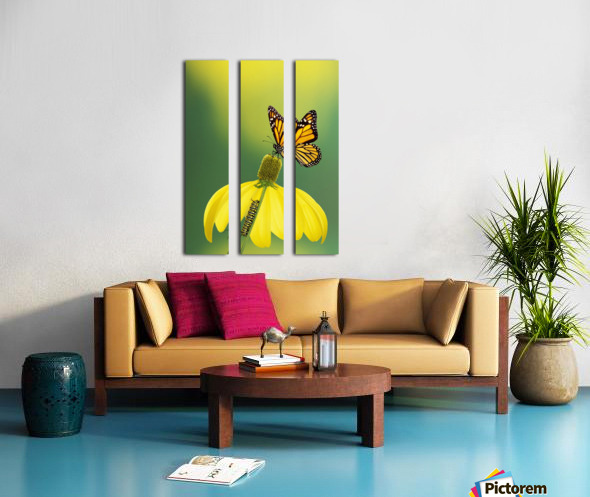 Caterpillar to butterfly;British columbia canada Split Canvas print