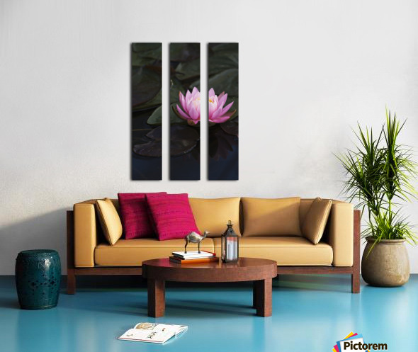 A water lily blooms in a pond; Astoria, Oregon, United States of America Split Canvas print