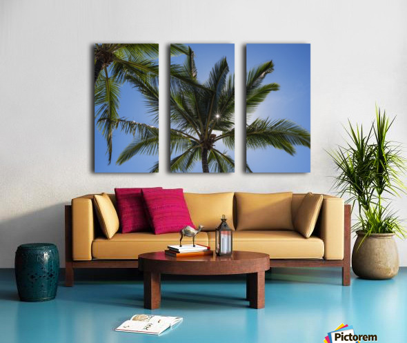 Coconut Palms backlit by the sunlight in a blue sky; Poipu, Kauai, Hawaii, United States of America Split Canvas print
