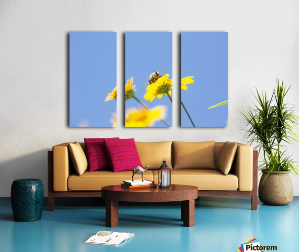 A bee is busy pollenating flowers as it goes about it's job collecting pollen; Bolivia Split Canvas print