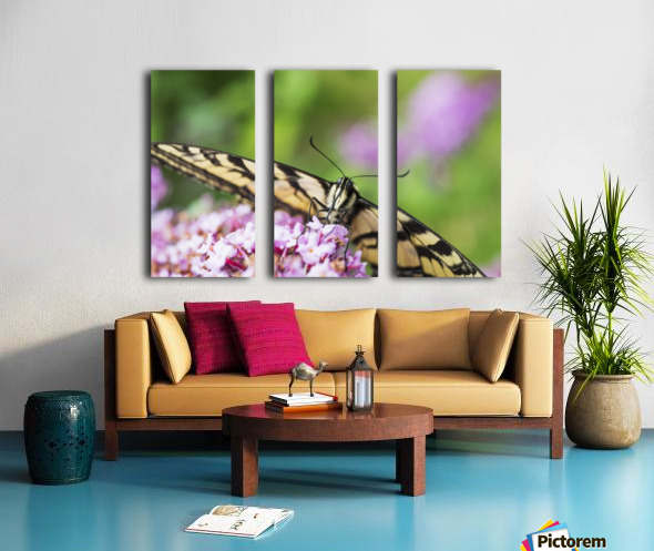 A swallowtail butterfly seeks nectar on a butterfly bush; Astoria, Oregon, United States of America Split Canvas print