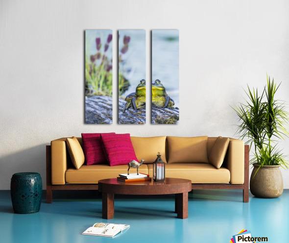 Bull frog (rana catesbeiana) resting on a log beside a lake; Ontario, Canada Split Canvas print