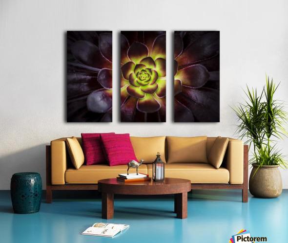 Purple and green Aeonium, Dublin Botanic Garden; Dublin, Leister, Ireland Split Canvas print