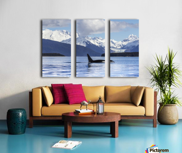 An Orca Whale (Killer Whale) (Orcinus orca) surfaces in Lynn Canal, Herbert Glacier, Inside Passage; Alaska, United States of America Split Canvas print