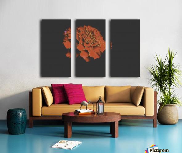 Carnation Bliss Split Canvas print