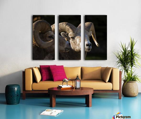 Bighorn Sheep, Waterton National Park, Alberta, Canada Split Canvas print