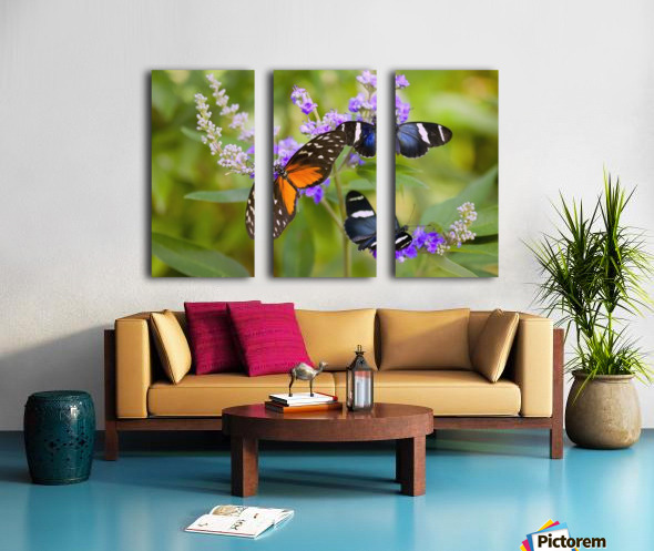 Three Colorful Butterflies On Blossoms In Spring; Oregon, Usa Split Canvas print
