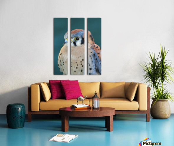 American Kestrel Split Canvas print
