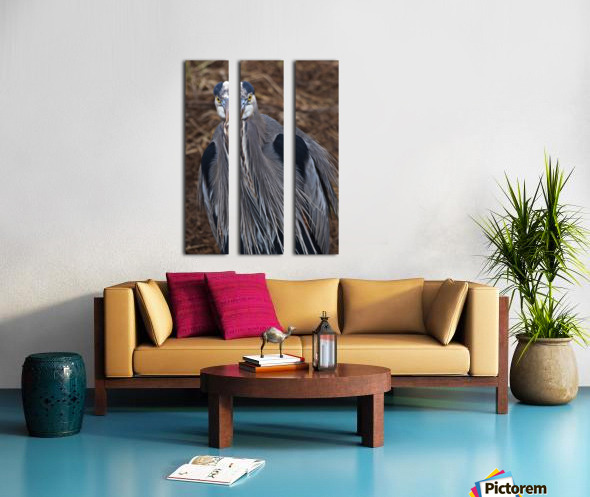 Face on view of great blue heron Split Canvas print