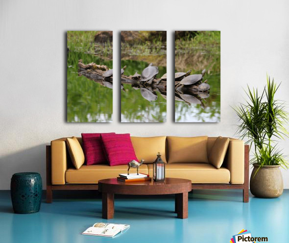 Turtle reflections Split Canvas print