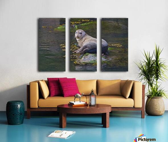 Sea lion near Depoe Bay, OR Split Canvas print