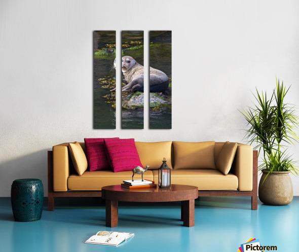 Sea lion portrait near Depoe Bay, OR Split Canvas print