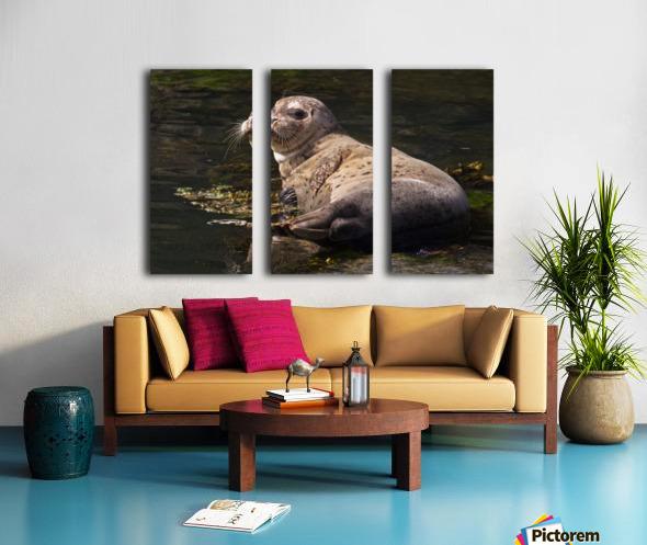 Sea lion posing Split Canvas print