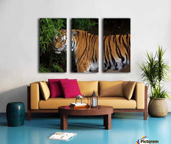 Female Tiger Split Canvas print