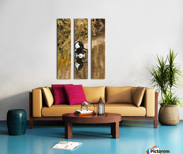 Hooded Merganser Drake Reflection-portrait Split Canvas print