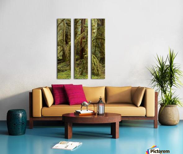 Moss covered tree in the Opal Creek Wilderness, Oregon Split Canvas print