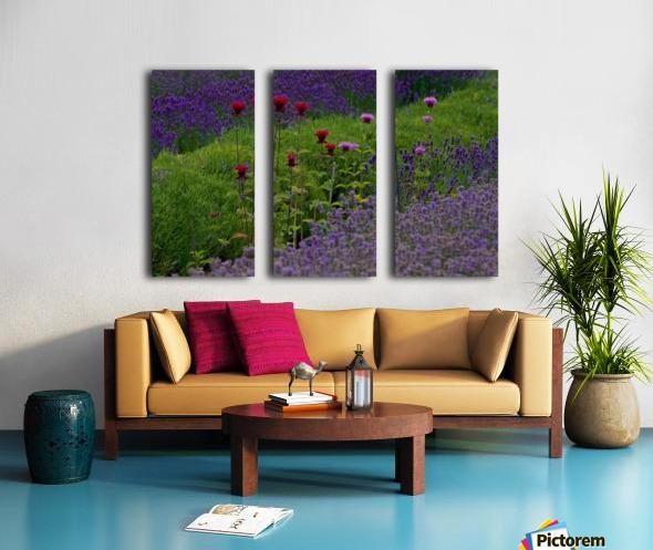 Bee Balm Blooming in Lavender Field Split Canvas print