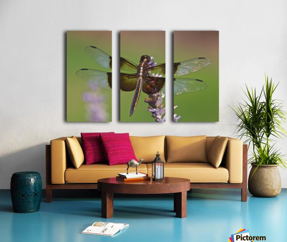 Dragonfly on Lavender Split Canvas print