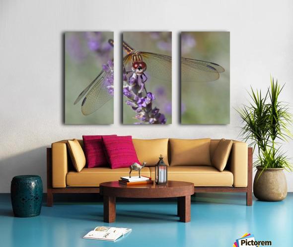 Dragonfly resting on flower. Split Canvas print