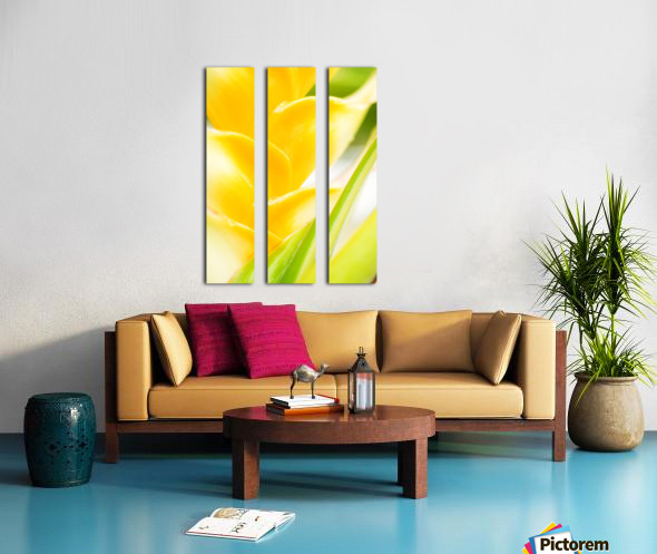Hawaii, Oahu, Close-Up Of Heliconia Plant. Split Canvas print