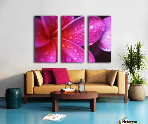 Hawaii, Maui, Extreme Close-Up Purple Pink Plumeria Blossom Water Droplets Aka Frangipani Split Canvas print
