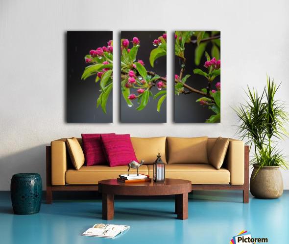 Spring has Sprung Split Canvas print