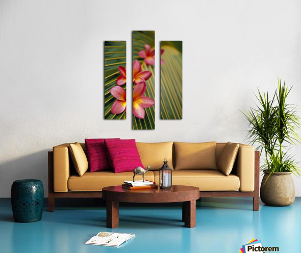Close-Up Three Pink Plumeria Flowers On Coconut Palm Leaf Selective Focus Canvas print