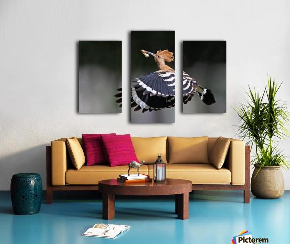 Hoopoe,Feeding.. Canvas print