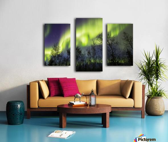Aurora borealis over silhouetted trees; Alaska, United States of America Canvas print